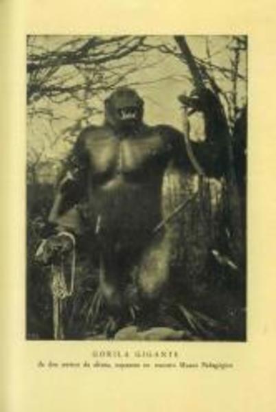 """Imatge del goril·la exposat en el """"Museo Pedagógico de Ciencias Naturales""""."""